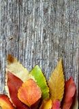 De Bladeren van de herfst over houten achtergrond Stock Afbeeldingen