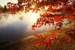 De bladeren van de herfst over nevelige vijver, CT Stock Foto