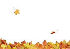 De bladeren van de herfst - samenstelling 3s1 Stock Foto's