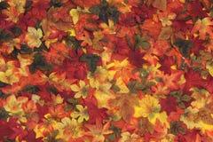 De bladeren van de herfst in seizoen Royalty-vrije Stock Afbeeldingen