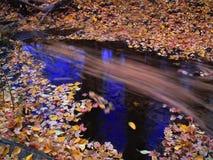 De bladeren van de herfst in stroom royalty-vrije stock foto's