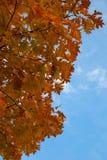 De bladeren van de herfst tegen hemel Stock Afbeeldingen