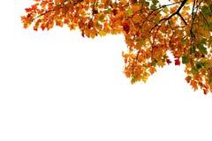 De bladeren van de herfst tegen wit stock afbeeldingen