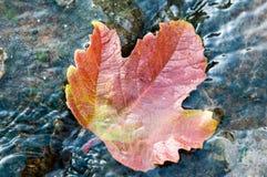 De bladeren van de herfst in water Stock Foto
