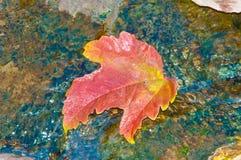 De bladeren van de herfst in water Royalty-vrije Stock Foto