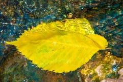 De bladeren van de herfst in water Stock Afbeelding