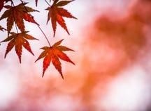 De bladeren van de herfst, zeer ondiepe nadruk Royalty-vrije Stock Foto