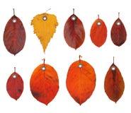 De bladeren van de het etiketherfst van de markering Royalty-vrije Stock Afbeeldingen