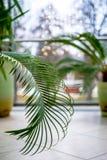 De bladeren van de installatie vooraan venster Stock Afbeelding