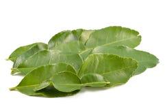 De bladeren van de Kaffirkalk Stock Foto's