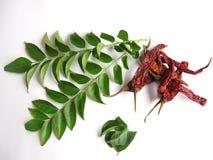 De bladeren van de kerrie en rode Spaanse pepers. Stock Afbeeldingen