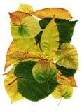 De bladeren van de kleur Stock Afbeeldingen
