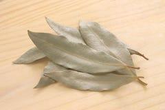 De bladeren van de laurier Royalty-vrije Stock Foto's