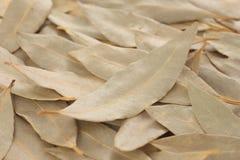 De bladeren van de laurier Stock Foto's