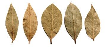 De bladeren van de laurier Stock Afbeeldingen