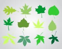 De lentebladeren Stock Foto's