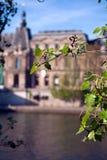 De bladeren van de lente en het Paleis van het Louvre, Parijs, Frankrijk Royalty-vrije Stock Afbeeldingen