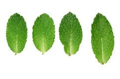 De bladeren van de munt Royalty-vrije Stock Afbeelding