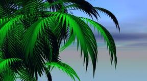 De bladeren van de palm vector illustratie