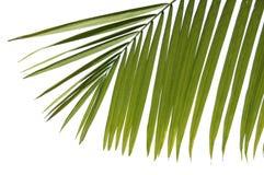 De bladeren van de palm stock foto's