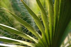 De bladeren van de palm Stock Afbeeldingen