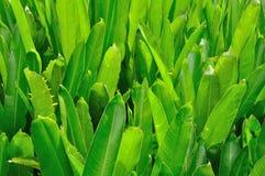 De bladeren van de paradijsvogel Stock Foto
