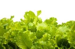De bladeren van de salade Royalty-vrije Stock Afbeeldingen