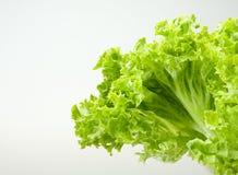 De bladeren van de salade Royalty-vrije Stock Foto's