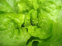 De bladeren van de salade Stock Foto