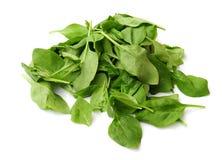 De bladeren van de spinazie Stock Foto