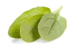 De bladeren van de spinazie stock afbeelding