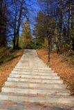 De bladeren van de trede en van de herfst Royalty-vrije Stock Foto's