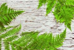 De bladeren van de varen op het oude hout royalty-vrije stock foto's