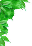 De bladeren van de verf stock afbeelding