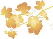 De bladeren van de wijnstok stock illustratie