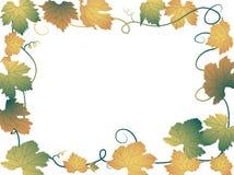 De bladeren van de wijnstok royalty-vrije illustratie