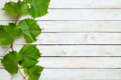 De bladeren van de wijnstok op houten achtergrond Royalty-vrije Stock Afbeeldingen