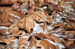 De bladeren van de winter Stock Afbeeldingen