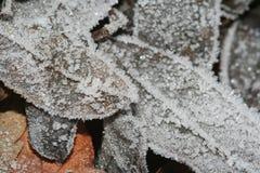 De Bladeren van de winter Stock Foto's