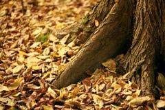 De bladeren van de Yeallowherfst onder de bomen Stock Foto's