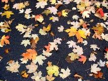 De bladeren van Fal Royalty-vrije Stock Foto