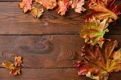 De bladeren van de gebladerteesdoorn Stock Foto's