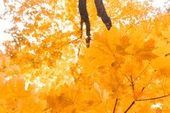 De bladeren van de herfst met de blauwe hemelachtergrond royalty-vrije stock fotografie