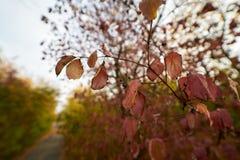 De bladeren van de herfst op boom stock fotografie