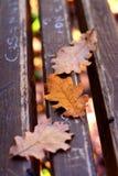De bladeren van de herfst op een bank royalty-vrije stock foto