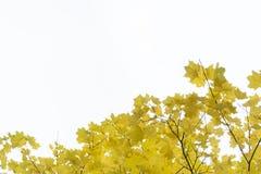 De bladeren van de herfst op een witte achtergrond stock afbeeldingen