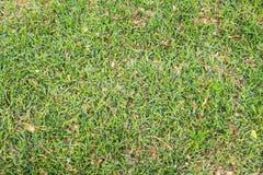 De bladeren van de herfst op groen gras Royalty-vrije Stock Afbeelding