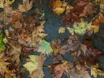 De bladeren van de herfst op sidwalk Stock Afbeeldingen