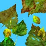 De bladeren van de herfst tegen de hemel Stock Afbeeldingen