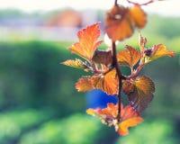De bladeren van de herfst in de tuin royalty-vrije stock afbeelding